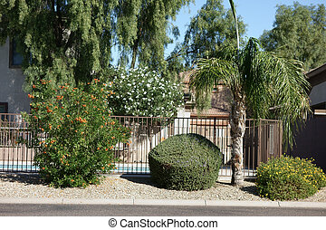 Arizona Front Yard - Street frontyard decorated with desert...