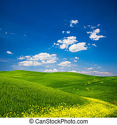 Green Field with Yellow Flowers - Beautiful view of a green...