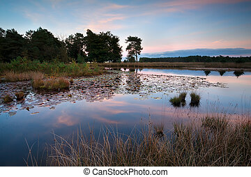 sunset over wild lake, Dwingelderveld, Drenthe, Netherlands