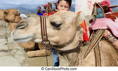 camel 2 - little boy touching camel head