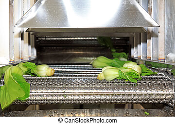 vegetables in the automatic cleaning equipment - vegetables...