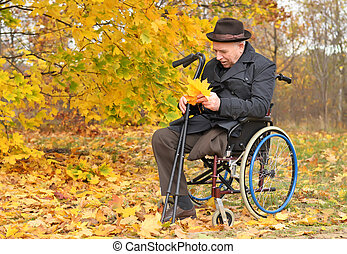 raccolta, invalido, carrozzella, Foglie, uomo