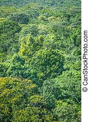 hintergrund,  rainforest