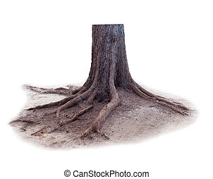 pine tree stump isolated white background