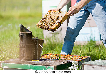 Male Apiarist Smoking A Beehive - Midsection of male...