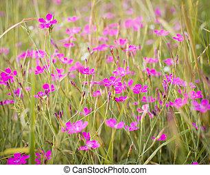 Little pink flowers in green grass - Little pink flowers in...