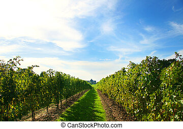 Vineyards on Niagara on the Lake