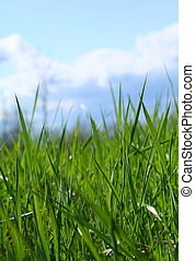 荒野, 草