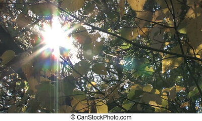 Sun Shines Through Branches - The sun shines brightly...
