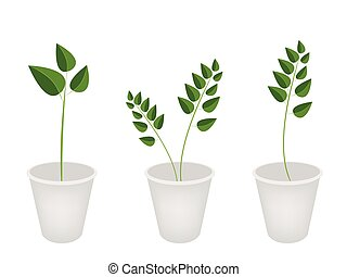A Set of Evergreen Plant in Flower Pots - Ecological...