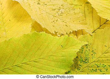 leaf - aging autumn leaves close up