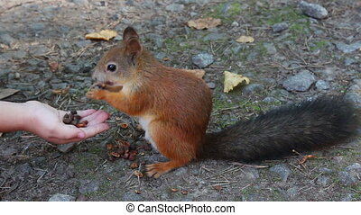 squirrel feeding with nuts in park