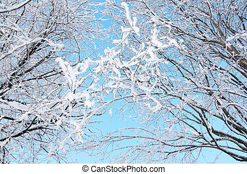 Beautiful bushes in frost in winter ay background of blue...