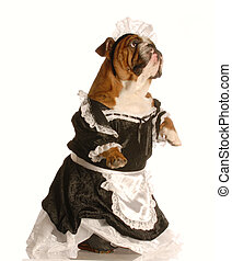 dog dressed up as maid