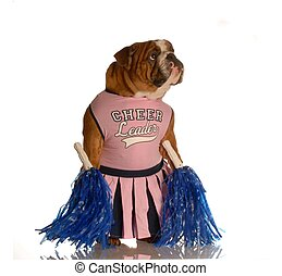 dog dressed as cheerleader - english bulldog dressed up as...