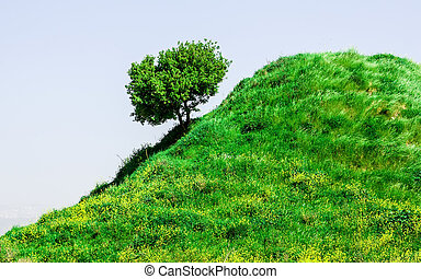 hillside - a springtime landscape with a lone tree on a...