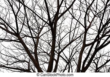 Branch of dead tree  - Branch of dead tree