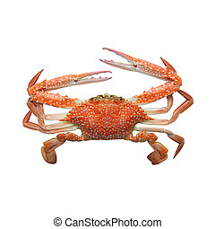 Crab isolated on white background