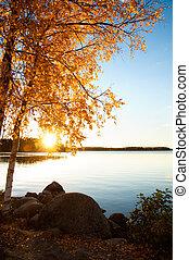Birches in autumn - Birches at a lake in Sweden in autumn,...