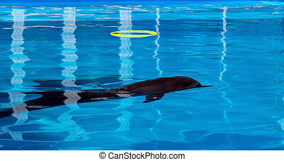 Dolphin playing in the swimming pool