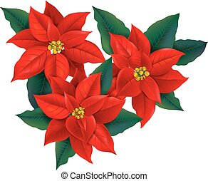 Red Poinsettia christmas flower. Contains transparent...