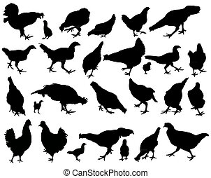 chicken silhouette vector set