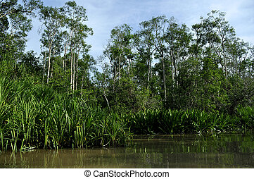 Tropical rainforest and river - Lush green rainforest along...