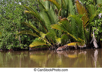 Palm leaves on the river - Palm trees growing on the...