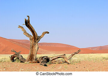 Sossusvlei sand dunes landscape in the Nanib desert near...