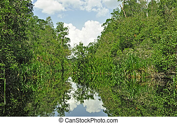 Rain forest mirrored in water - Lush green rainforest along...