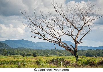 Dead tree on greenfield