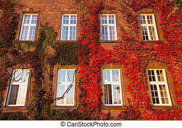 Windows of Wawel Castle autumn in Krakow, Poland