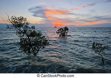 mangrove tree,sunset and beach - Taken during sunset