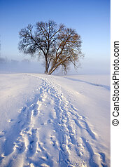 winter morning landscape with snow and lonely tree