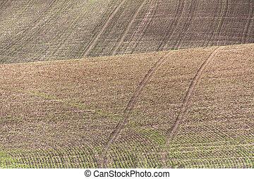 Farm Land, green wheat fields