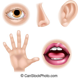 Five Senses Body Parts - Five senses illustrations with hand...