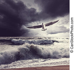 Sea gull and waves