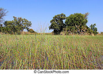 Okavango Delta water landscape. North of Botswana.