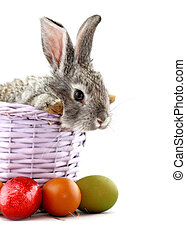 Gray rabbit - Fluffy gray rabbit in basket with Easter eggs...