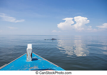 tail fin whale - Tail fin of Brydes whale in gulf of...