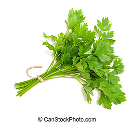 Parsley - parsley bunch  isolated on white background