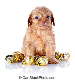 Puppy with New Years balls - Puppy in a wattled basket with...
