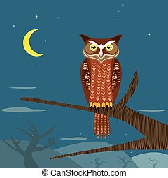Owl in the night time.