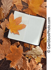 Autumn - Close-up view on a blank notepad with autumn leaves