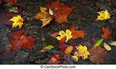 Fall Leaves and Trickling Water Loop - Seamless loop...