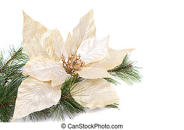 A white Christmas poinsettia on a white background