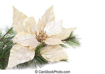 A white Christmas poinsettia on a white background