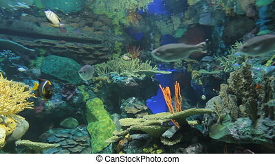 Aquarium with exotic fish