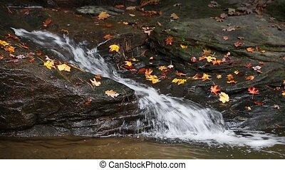 Autumn Leaves and Splashing Stream - Whitewater splashes...