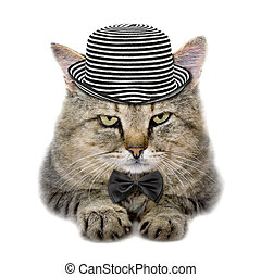 cat in a hat and a butterfly tie - cat in a hat and tie...